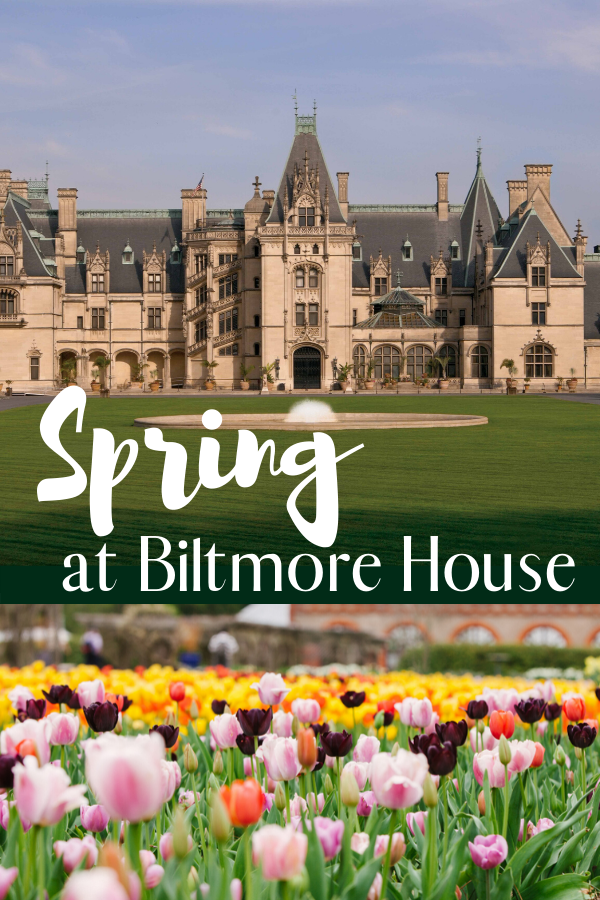 Biltmore House located in Ashville N.C. The Vanderbuilt home open for visitors year round. Spring at Biltmore #biltmore