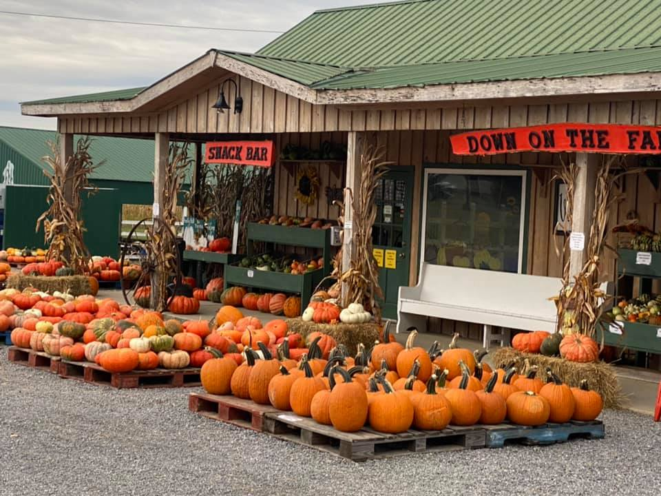 A Pumpkin farm store with lots of pumpkins displayed in front