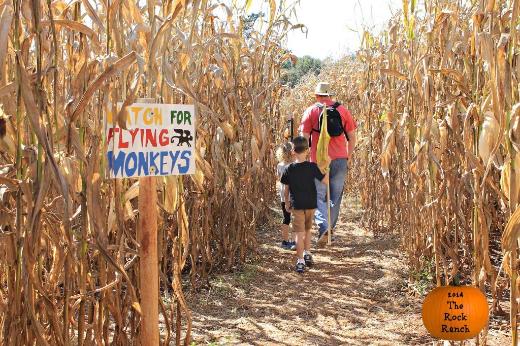 People walking through a Corn Maze